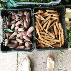 Warzywa z RWS - zdrowe, bezpośrednio z gospodarstwa