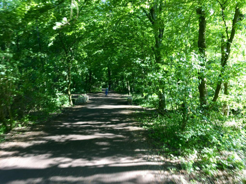 Las idealny na piknik i mikrowyprawę
