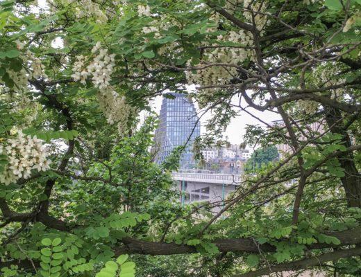 Zielone miasto - EU Green Week