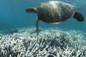 Koralowce blakną od kremów do opalania, ale przede wszystkim od ocieplającego się klimatu