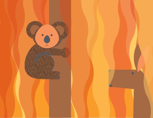 Dlaczego Australia płonie i jak mogę pomóc